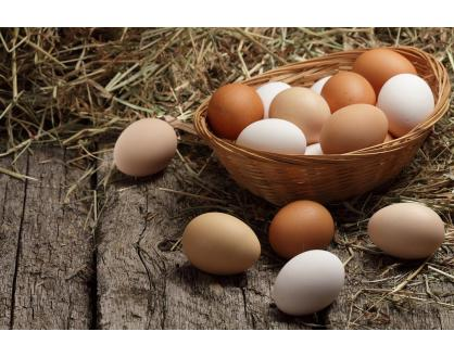 Which comes first, the chicken or the egg? How chick and hen nutrition affects egg production.