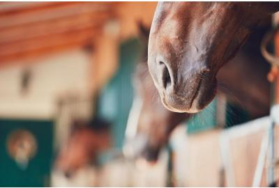Low Starch Lifestyle: How Horses Can Benefit