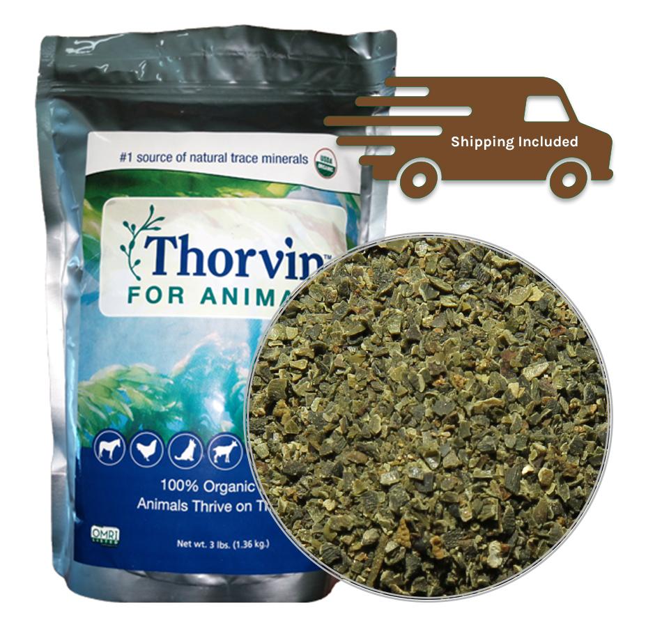 Thorvin Kelp, 3 LBs