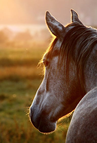 Shop All Equine Products
